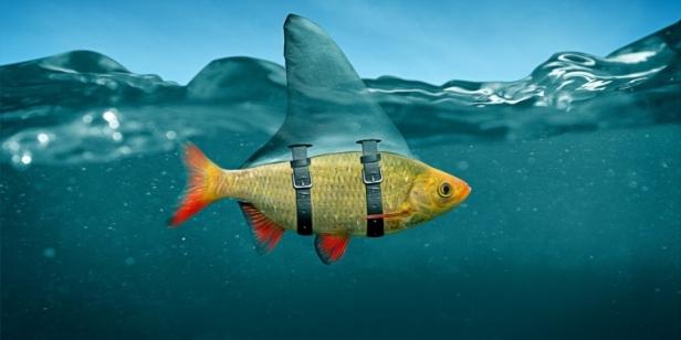 falsefish